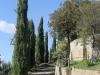 5 cipressi Via del Castello