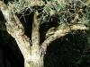 wspanialy pien drzewa