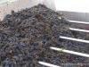 4 Volpaia wyciskanie soczku na wino