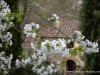 2 kwiaty i Borgo di Capannole