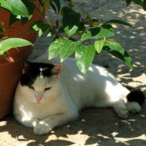 Opowiem Ci o zasługach Kiciusia w ogrodzie czyli Futrzak i ja