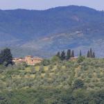Drzewko oliwne i jego kwiaty