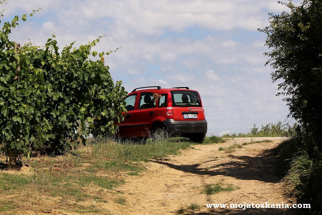ikona Pandzia ukryta za winoroslami obserwuje swiat Toskanii