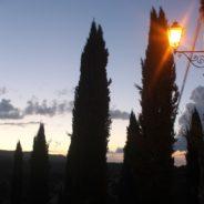 Cyprysy w wieczornej Głuszy