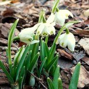 Pierwsze oznaki wiosny w Toskanii. Czas Przebudzenia.