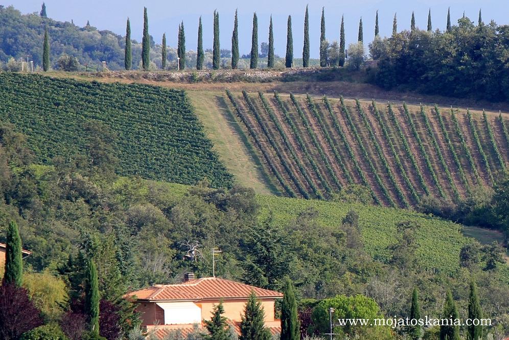 12 r 2014 cyprysy wino i domek