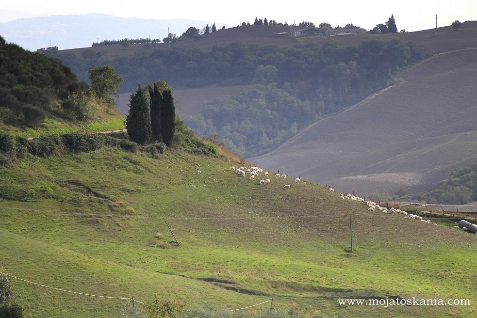 2 owce