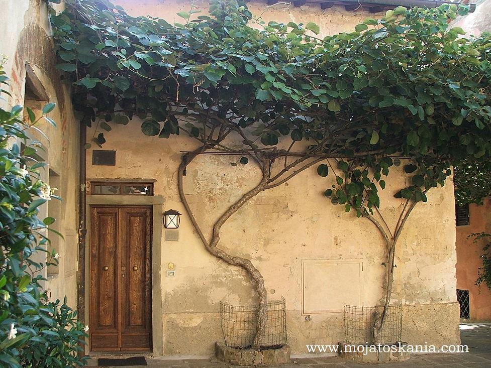 3 Borro drzewa kiwi