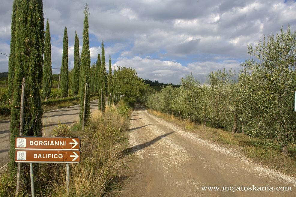 4 Cipressi la strada fra le vigne