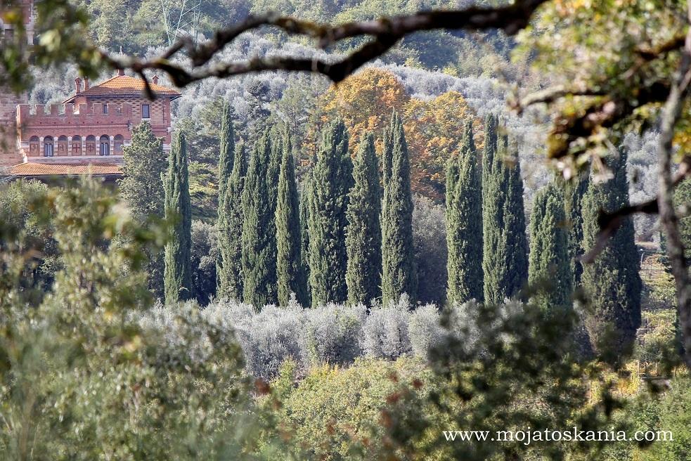 5 Lupinari jesien