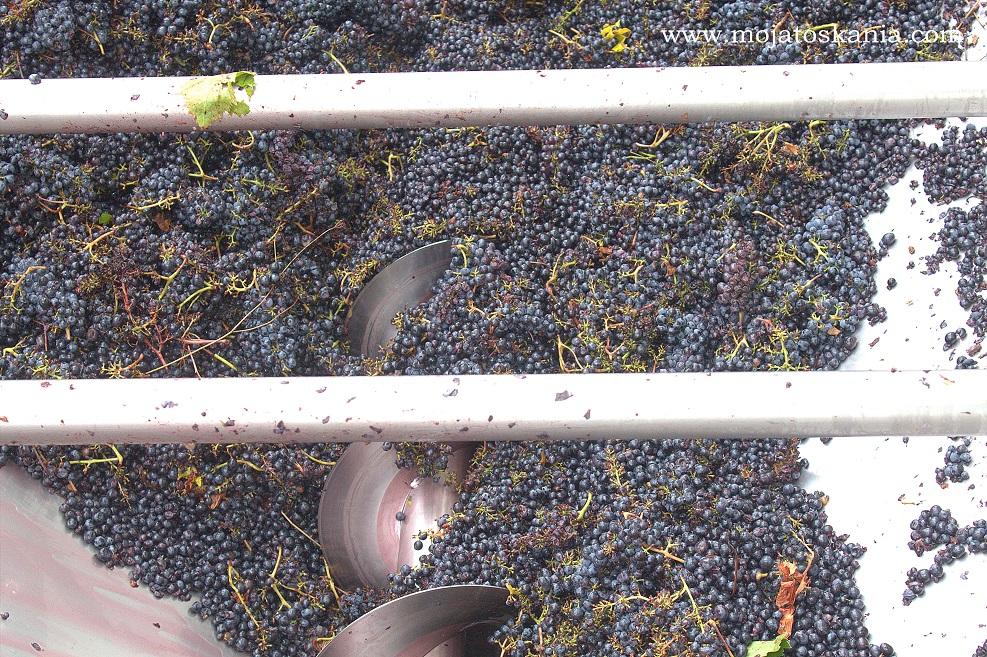 5 Volpaia wyciskanie soku z winogron