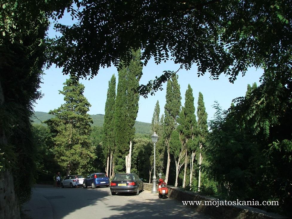 6 Borro parking z cyprysami