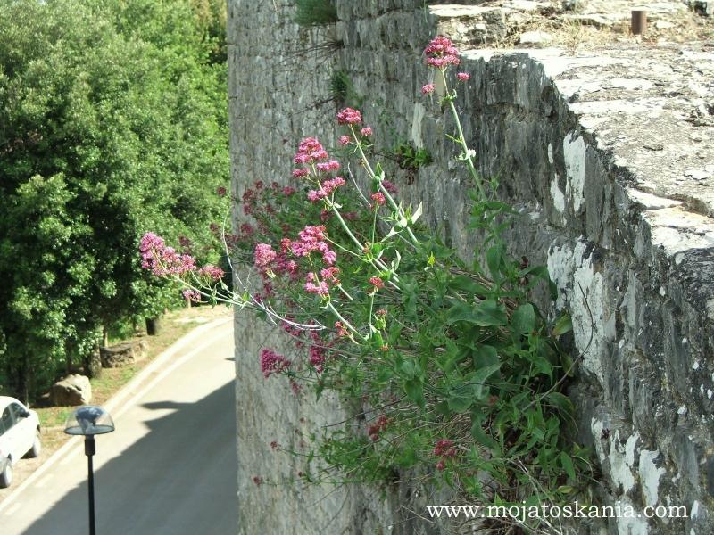 Civitella le mura 2