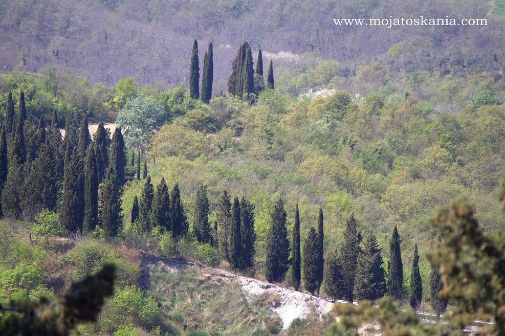 Monte Oliveto droga do klasztoru