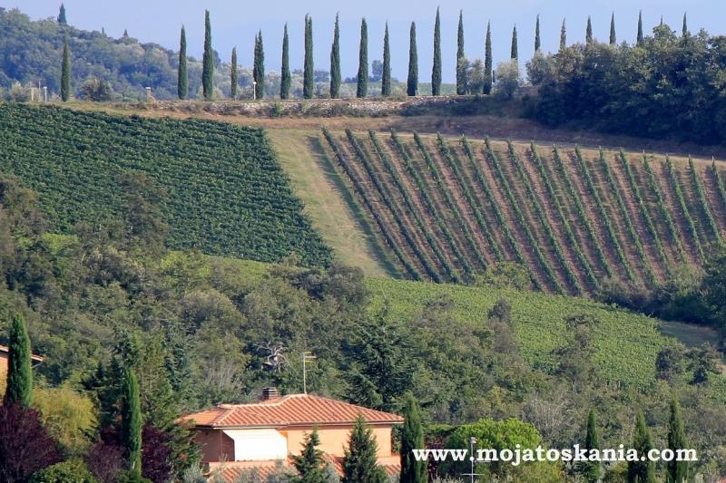 cyprysy wino i domek