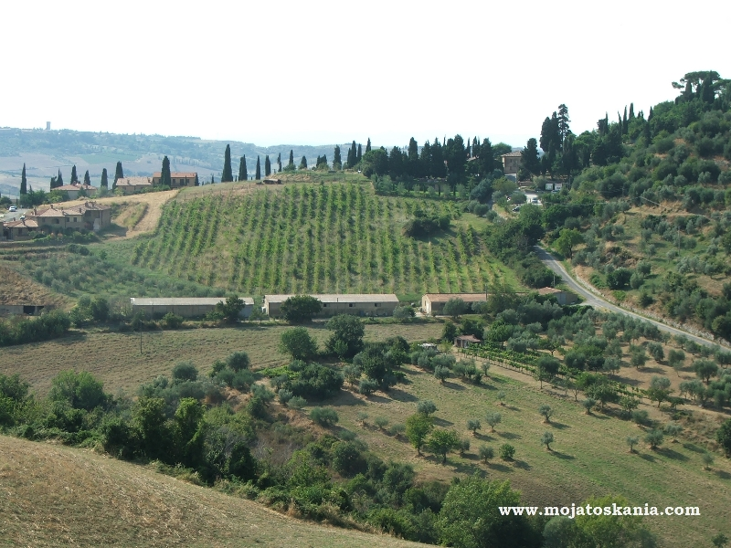 okolice-montepulciano-sierpie