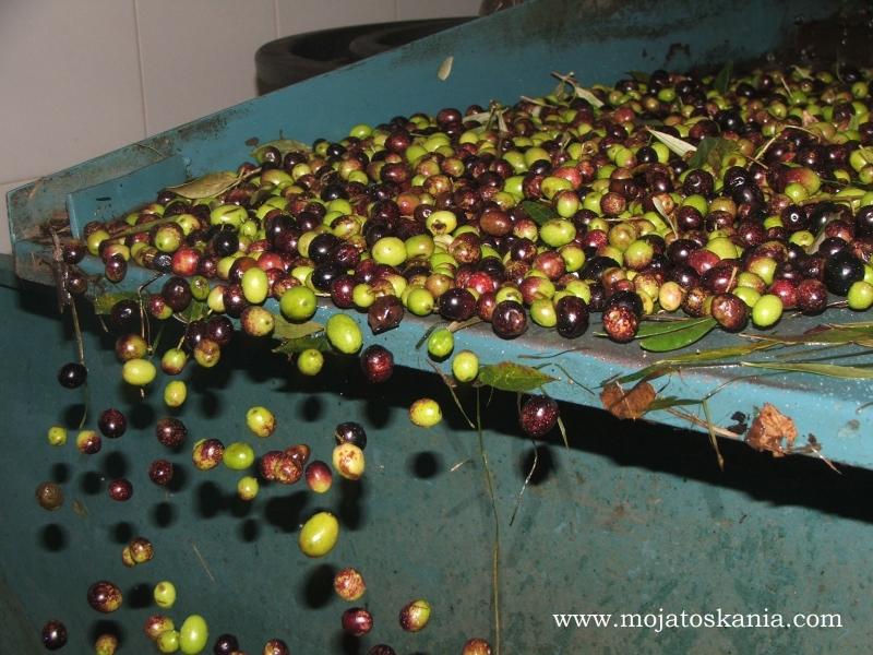 oliwki spadajace